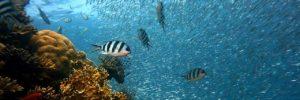 La biodiversité marine menacée